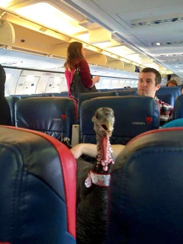 annoying passenger shaming flight travel airlines 16 605